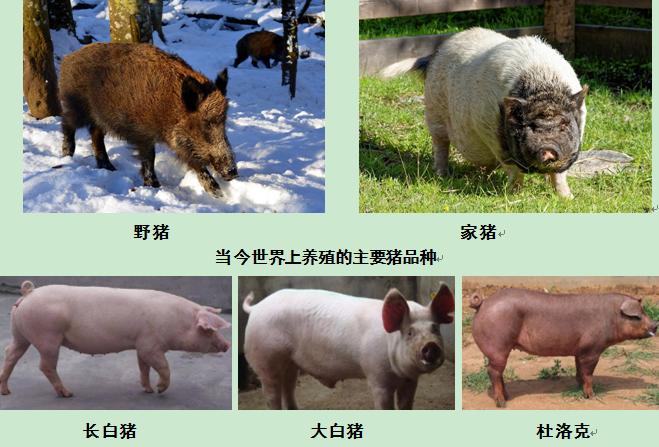 QQ图片20200826160835.png