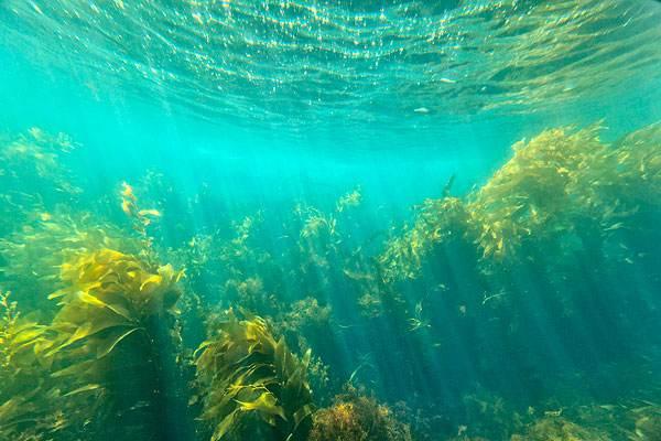 海藻.jpg